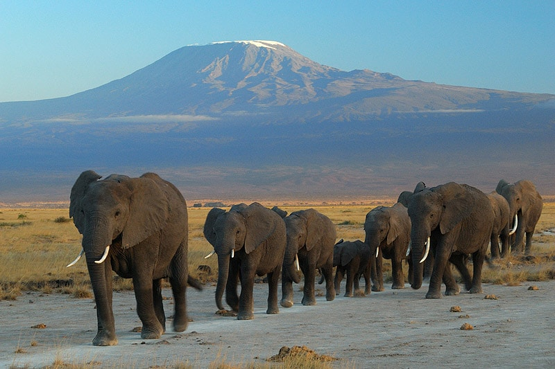 elephants_at_amboseli_national_park