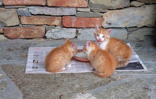quelle-est-la-meilleure-alimentation-pour-votre-chat