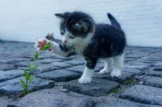 meilleure-alimentation-pour-votre-chat